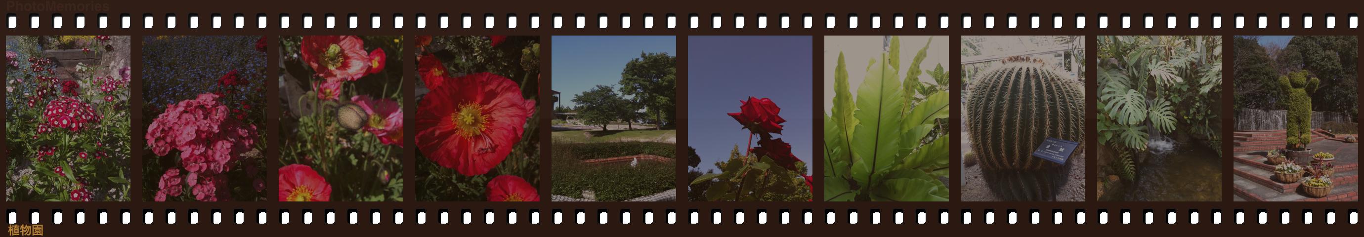 PhotoMemories Demo 1.3.0